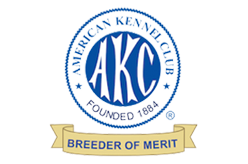 AKC Breeder of Merit, Jill Eastman of Daveren German Pinschers