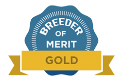 Gold Level Breeder of Merit, Jill Eastman of Daveren German Pinschers