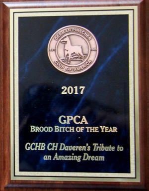 2017 GPCA Brood Bitch of the Year Award - GCHB CH Daveren's Tribute to an Amazing Dream