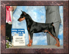 GOLD GRAND CHAMPION Daveren's Peaceful Dream CAA CGC