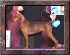 BISS SILVER GRAND CHAMPION Daveren's What Dreams May Come for LinDee