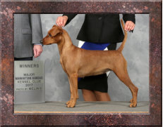 CHAMPION Legendorf Shantli Roz