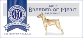 German Pinscher AKC Breeder of Merit Participant